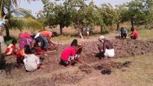 Experimental organic farming