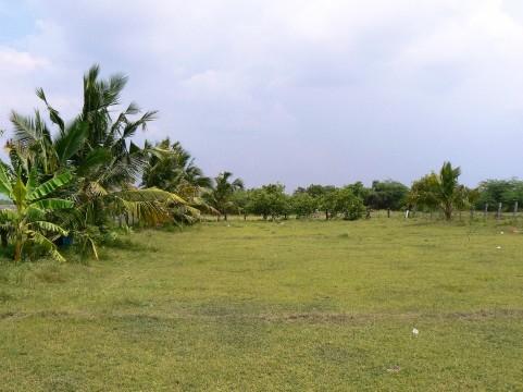 The land for organic farm